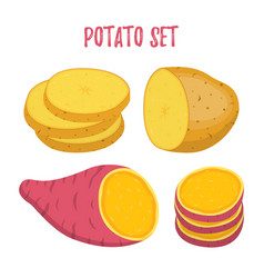 potato set sweet potatocartoon flat style vector image