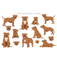 Staffordshire bull terrier in different poses vector