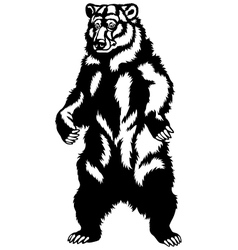 grizzly bear black black vector image