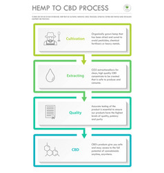 Hemp to cbd process vertical business infographic vector