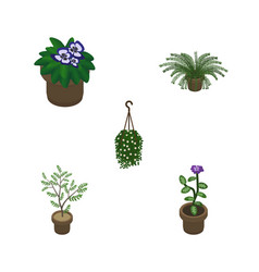 Isometric plant set of flower plant blossom and vector