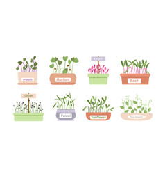 Micro greens sprouts food cartoon set baby vector