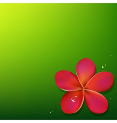 Pink frangipani with green background vector