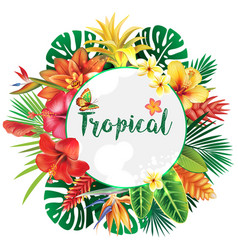 banner from tropical and flowers vector image