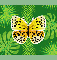 insect with wings yellow butterfly in dots vector image