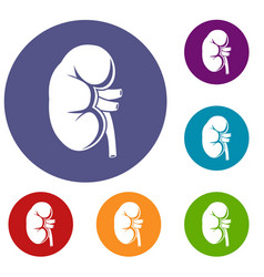 Kidney icons set vector