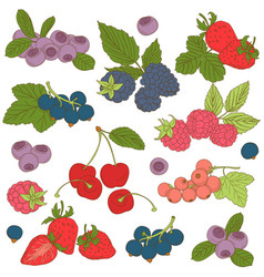 set outline hand drawn berries blackberry vector image