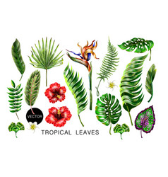 set of realistic tropical flowers and leaves vector image