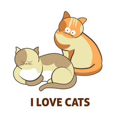 i love cute cats pets or kittens playing or posing vector image vector image
