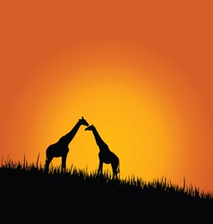 giraffe in wilderness color vector image