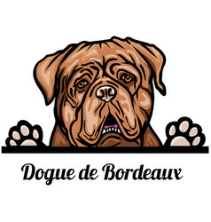 Head dogue de bordeaux - dog breed color image of vector