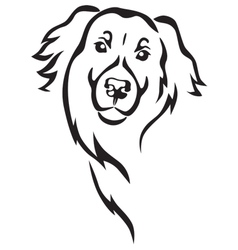 Newfoundland dog head vector image