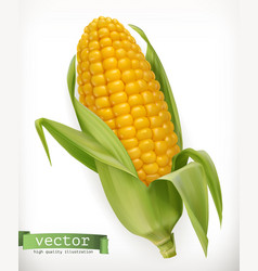 corn cob 3d icon vector image