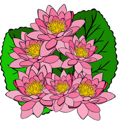 Bouquet of pink water lilies and green leaves vector