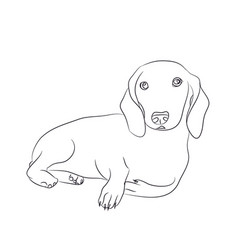 Dog lies dachshund lines vector