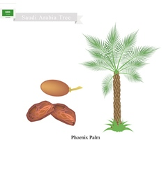 Phoenix Palm A National Tree of Saudi Arabia vector image