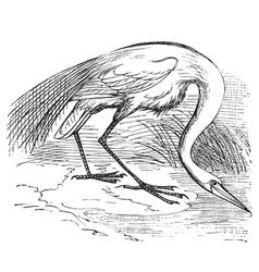 White Heron vintage engraving vector image vector image