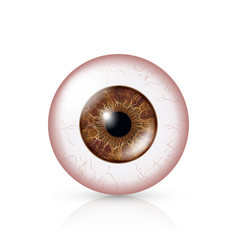 conjunctivitis red eye human eyeball with vector image