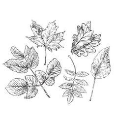 hand drawing leaves 3 vector image
