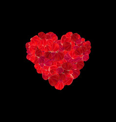 heart made from red rose petals isolated on dark vector image