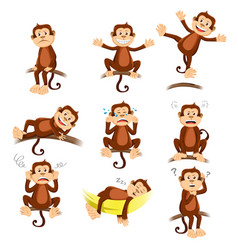 Monkey with different expression vector