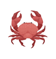 Red crab with big claws sea animal marine vector