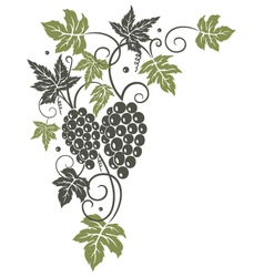 Vine leaves grapes vector image