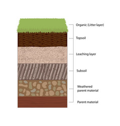 soil horizons and layers vector image