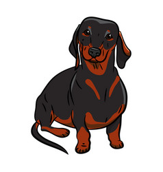 black dachshund dog hand-drawn dog realistically vector image