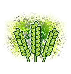 green corn on the background vector image