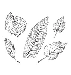 hand drawing leaves 4 vector image