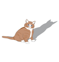 real cat with red hair and shadow vector image