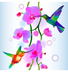 Seamless background with orchids and humming-birds vector