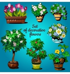 Set of decorative house plants vector image
