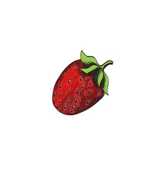 sketch strawberry vector image