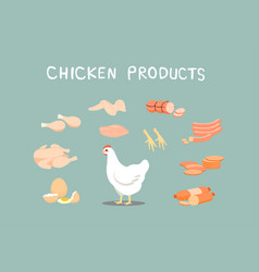 chicken products it is a popular food vector image