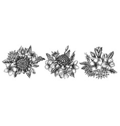 flower bouquet black and white plumeria vector image