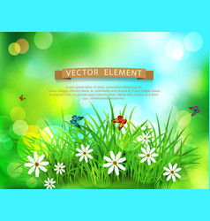 green grass with white flowers butterflies vector image