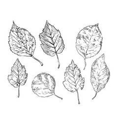 hand drawing leaves 5 vector image