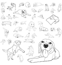 Drawing set of adorable beagle dog vector image vector image