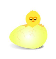 chicken3 vector image
