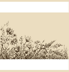 field flowers border drawing vector image