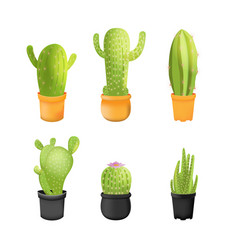 cactus plants icons set isolated vector image vector image