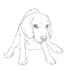 Adorable Beagle on funny sitting pose vector image
