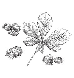 Hand drawing leaves 6 vector