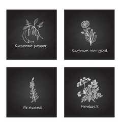 Handdrawn Medicinal Herbs - Health and Nature Set vector image