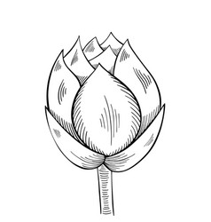 lotus lily water vector image
