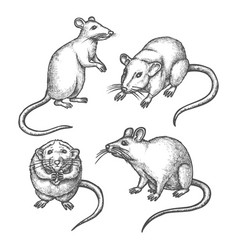 Mouse sketch or hand drawn rat lab rodent vector