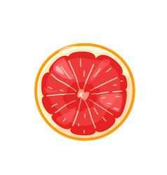 Red sliced orange grapefruit fruit in bright color vector