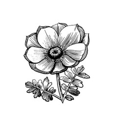 Sketch of a flower with leaves vector